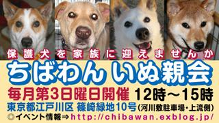 chibawan_teiki_inuoyakai320x180_20120609105443.jpg