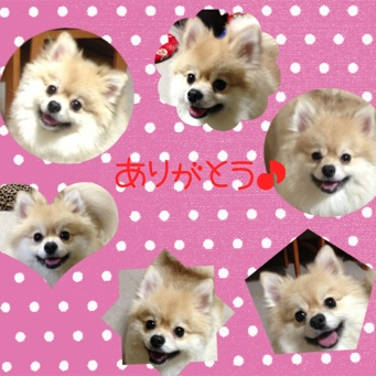 fc2blog_20131231205725e84.jpg