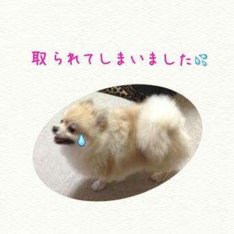 fc2blog_20140110172223378.jpg