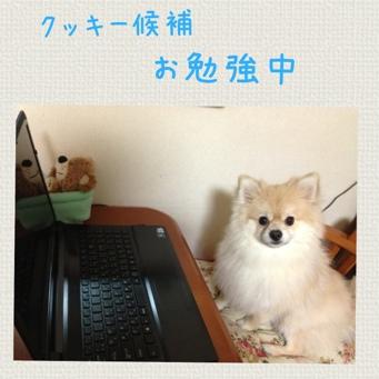 fc2blog_20140123204049005.jpg