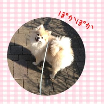fc2blog_20140128204848c0a.jpg
