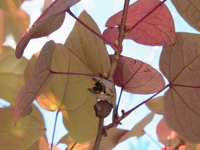 oonogongenyama2012.10.08 005