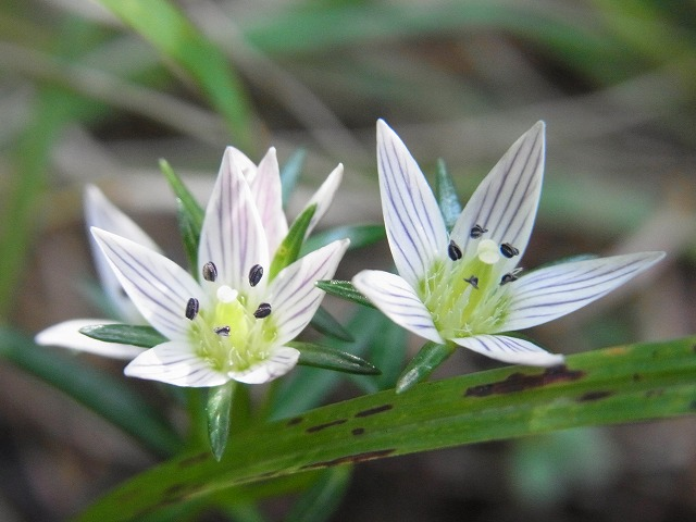 oonogongenyama2012.10.08 036