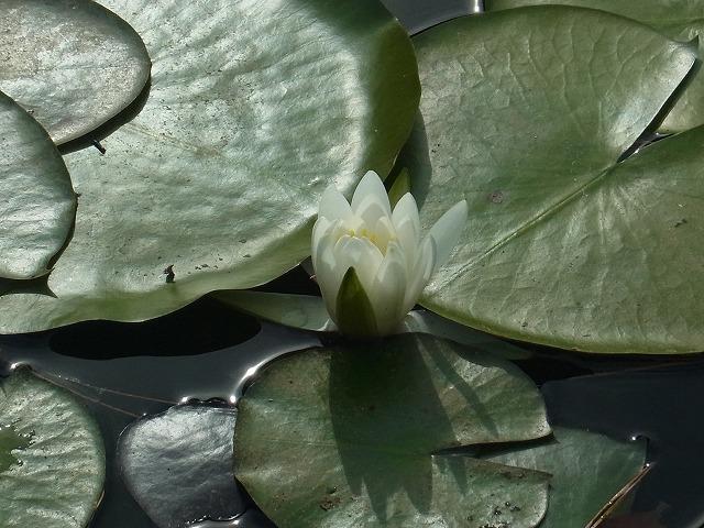 oonogongenyama2012.10.08 116