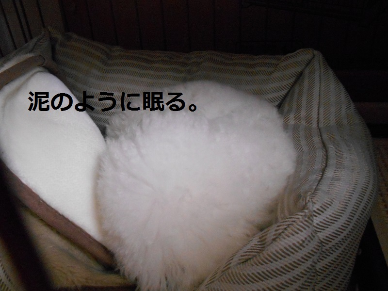 DSCN0770.jpg