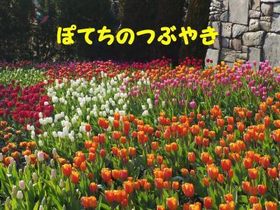 20130124 お花