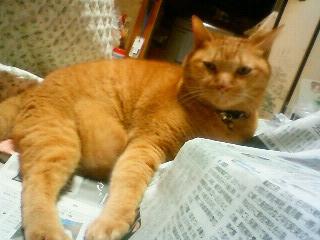 新聞よみますか