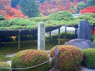 天然記念物 遊龍の松