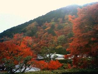 本堂から山側の紅葉