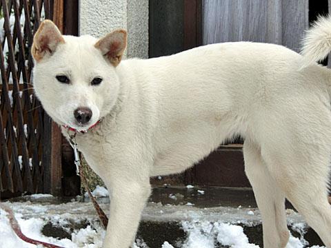 雪と遊ぶのは楽しいけど、雪を投げられると怖いよ~~