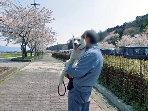 桜見はももちゃんの抱っこで疲れたよ~