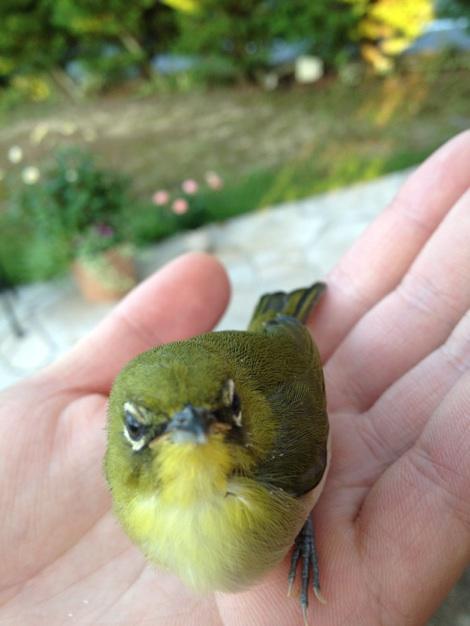 グスターの迷い鳥02