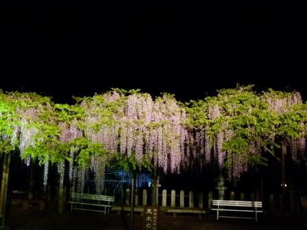2012.4.29黒木の大藤 004
