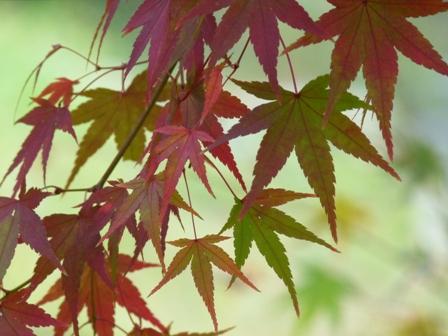 2012.11.9紅葉 042