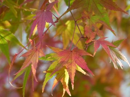 2012.11.9紅葉 051