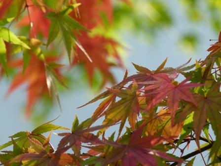 2012.11.9紅葉 055