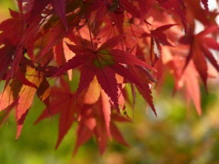 2012.11.9紅葉 045