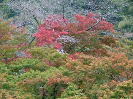 2012.11.10清流庵辺り 031