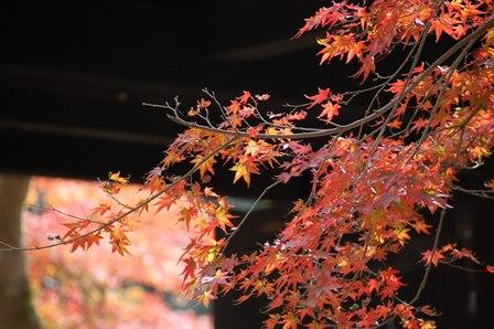 2012.11.15黒門他 025