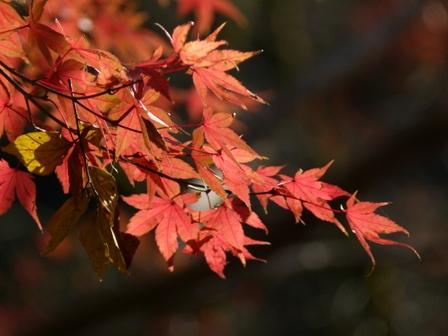 2012.11.27散歩 021