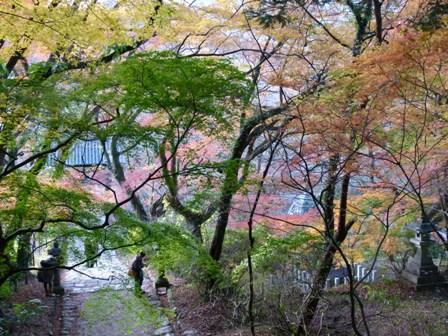 2012.11.27散歩 007