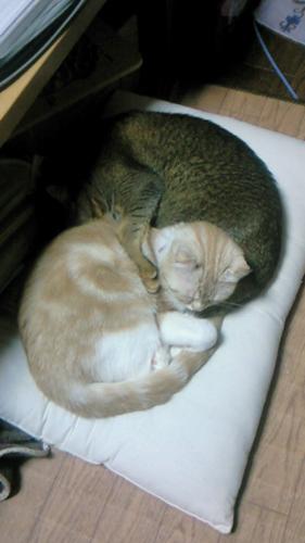 テオ&ルカ003
