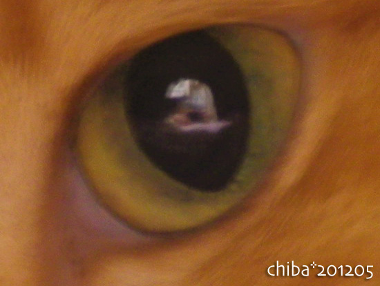 chiba12-05-30.jpg