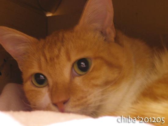 chiba12-05-31.jpg