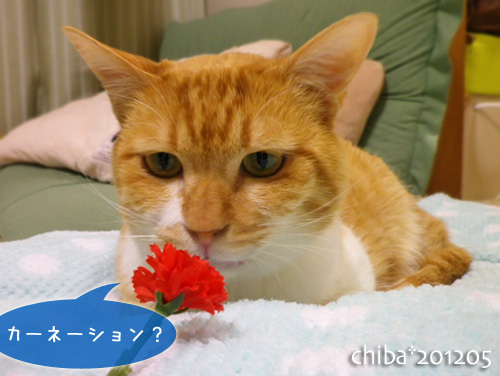 chiba12-05-51.jpg