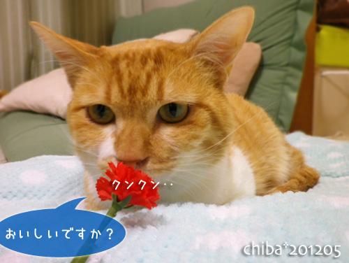 chiba12-05-52.jpg