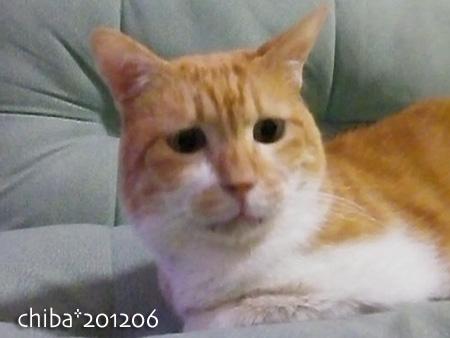 chiba12-06-103.jpg