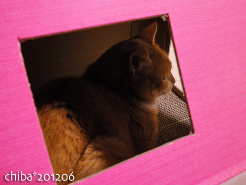 chiba12-06-114.jpg