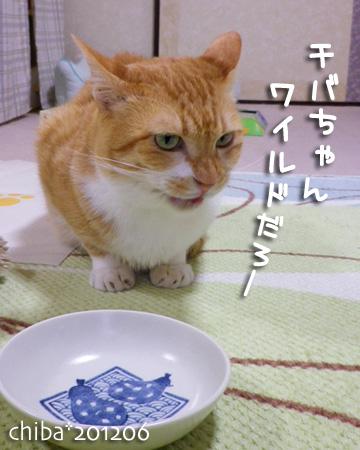 chiba12-06-56x.jpg