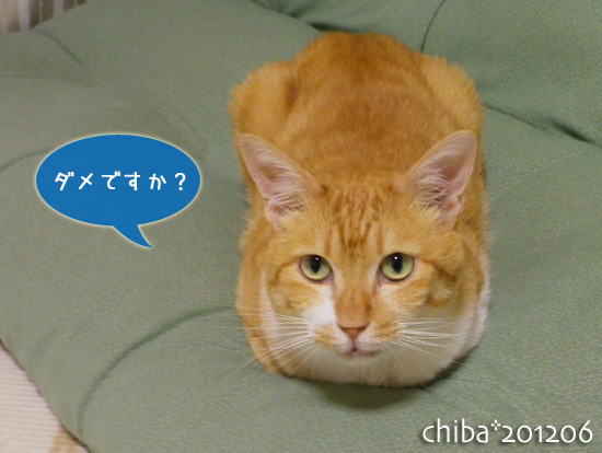 chiba12-06-84.jpg