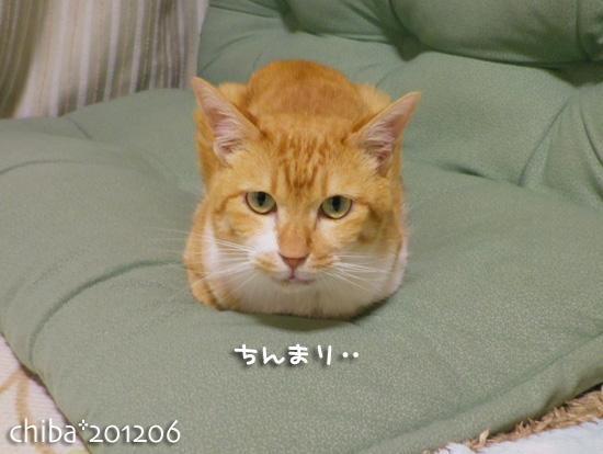 chiba12-06-85.jpg