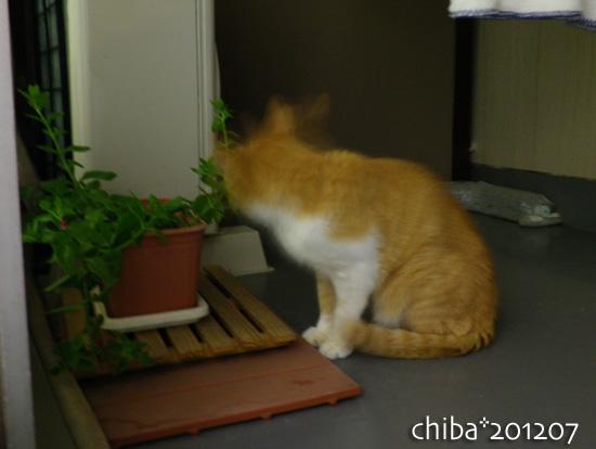 chiba12-07-01.jpg