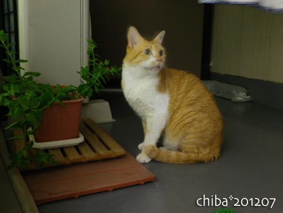 chiba12-07-02.jpg