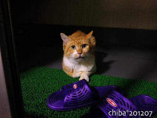 chiba12-07-03.jpg