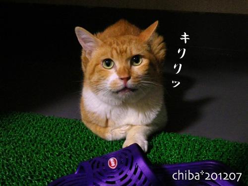 chiba12-07-04.jpg