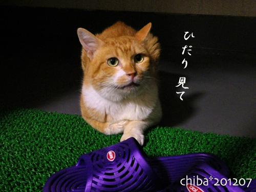 chiba12-07-05.jpg