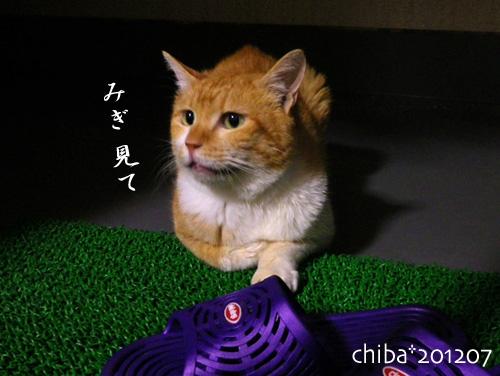 chiba12-07-06.jpg
