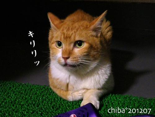 chiba12-07-08.jpg