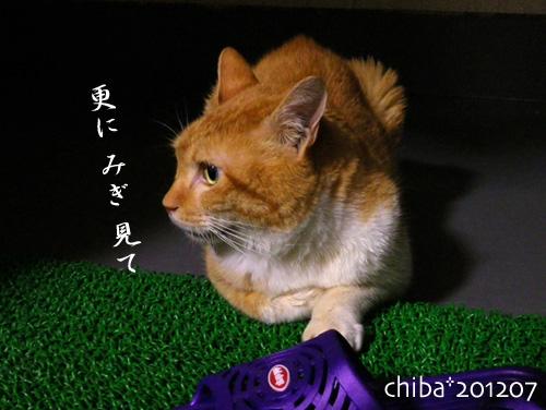 chiba12-07-09.jpg