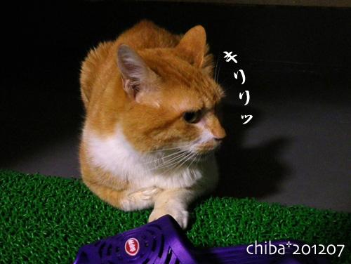 chiba12-07-10.jpg