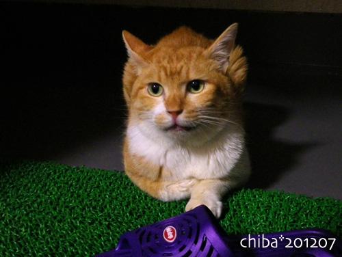 chiba12-07-14.jpg