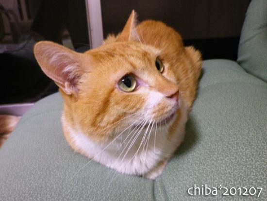 chiba12-07-17.jpg