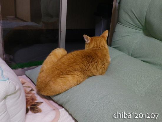 chiba12-07-30.jpg