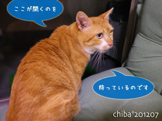 chiba12-07-33.jpg