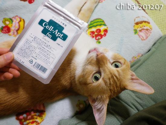 chiba12-07-35.jpg