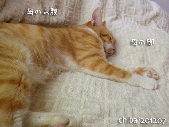 chiba12-07-36.jpg
